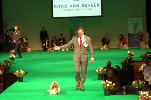 PANYIN TSIN FATINAT AL SJARK (DONNA) op de Beste Hond van het jaar show 2014