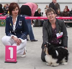 Whispering love's playboy Leiden  18-03- best pup Reu (Custom)