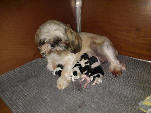 Even bijkomen met de puppy's